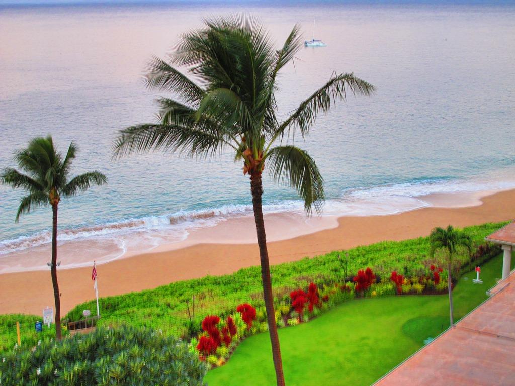 Tropical Island Paradise: Tropical Paradise